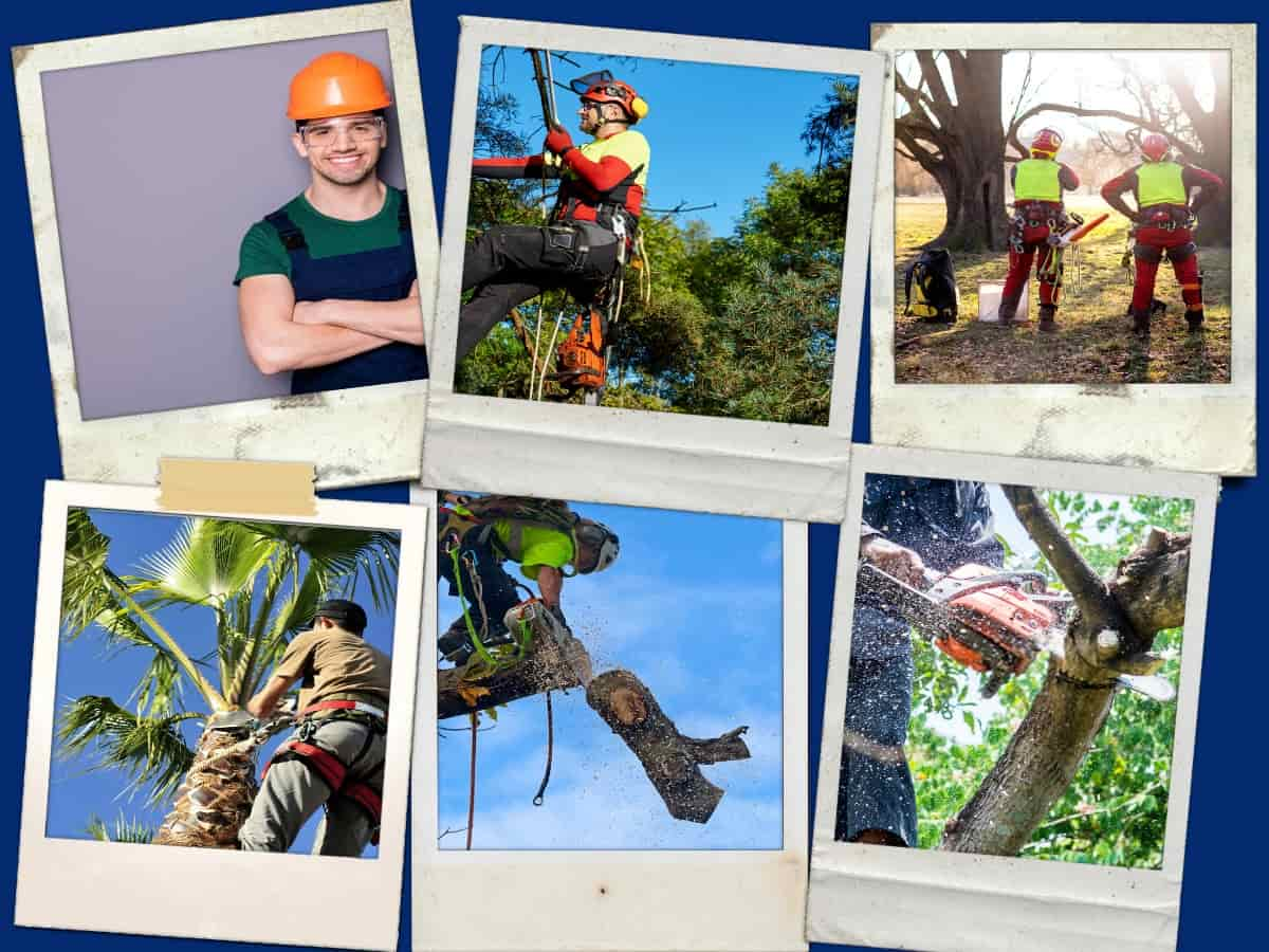 South Austin Tree Service Collage